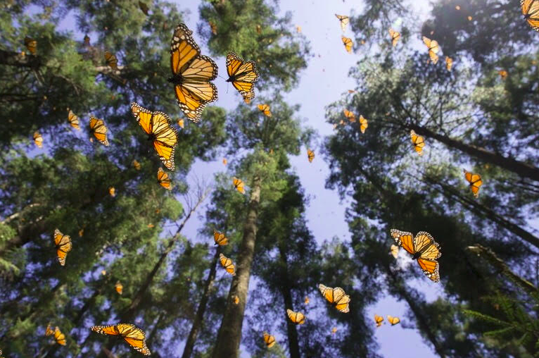 Hiking Monarch Butterfly Mexico