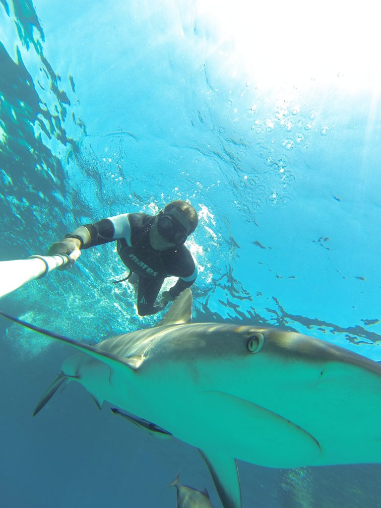 freediver with shark